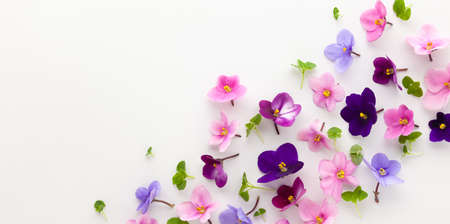 Spring or summer flower composition with edible violets on white background. Flat lay, copy space. Healthy life and flowers concept.