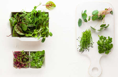 Different types of organic microgreens sprouts. Vegetarian, clean and healthy eating concept. Seed germination at home.
