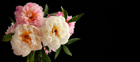 Beautiful peony flowers close-up, macro photography, soft focus. Spring or summer floral background. 免版税图像