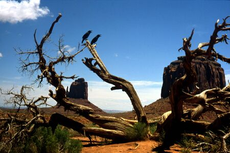 Monument Valley, crows on a tree
