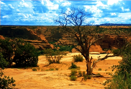 Canyon de Chilly, skeletal tree, Arizona