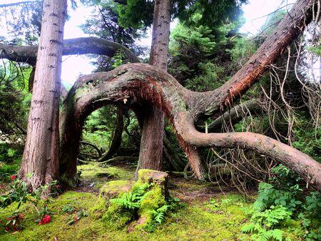 quicksand: Tree