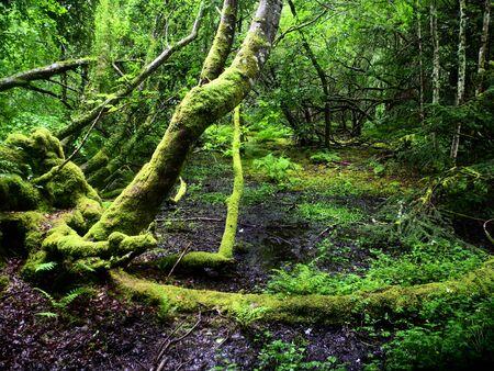 quicksand: Scotland