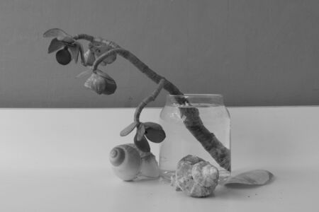 metaphysical: Glass, plant and shells