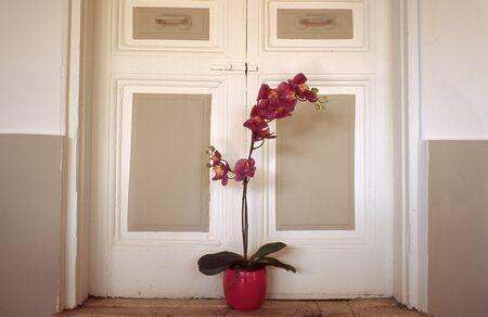 Vaso di fiori Archivio Fotografico - 85751080