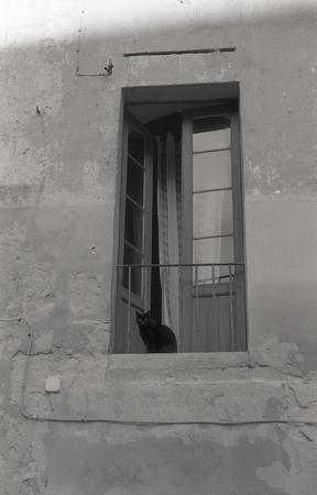 Cat at the window. Archivio Fotografico - 104597924