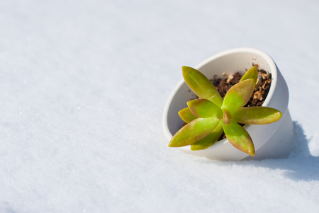 surviving: A small plant in a pot surviving in the snow all over the ground.