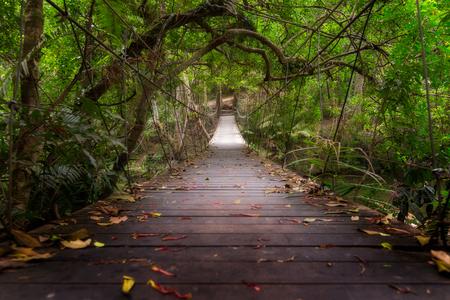 Rope Bridge to the jungle,Khao Yai national park,Thailand