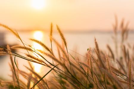 beautiful wild field of grass on sunset, soft sun rays, warm toning, lens flares, shallow DOF. blur