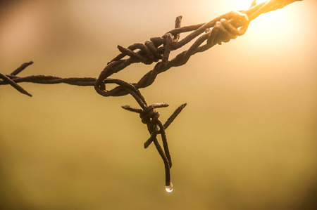 dewdrop on a barbed wire with blurred background.