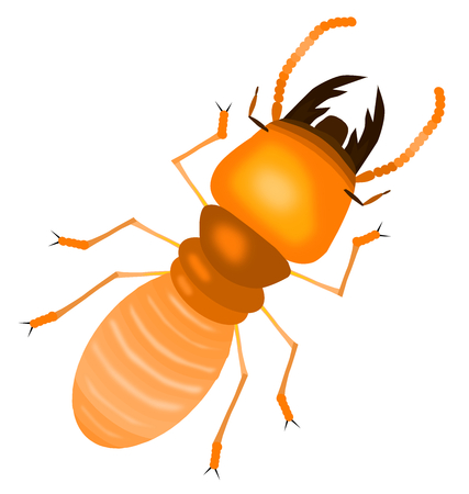 Illustration of an orange termite with a white background Foto de archivo - 97532343