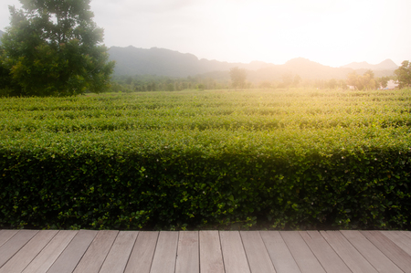 wooden table top with the mountain and tree,Bush on sky and sinlight landscape