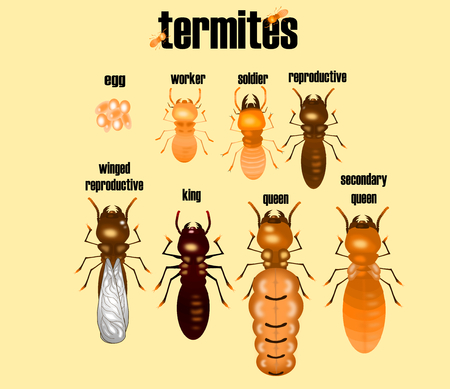 type of termite,white ant collection,cartoon style,illustration vector