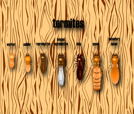 termite life cycle with wood background,cartoon style,vector.