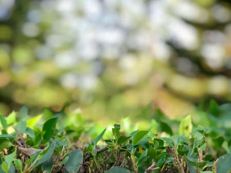 Green bush with blurred tree or forest background, nature texture Stock fotó
