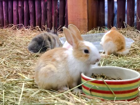 A group of little rabbit with dry straw,Feeding animals