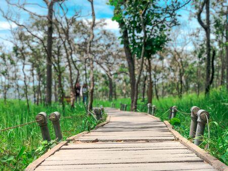 wooden bridge stretches into the siam tulip field