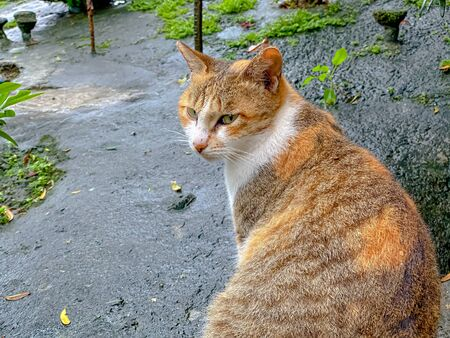 the Asian cat sitting at the park after raining