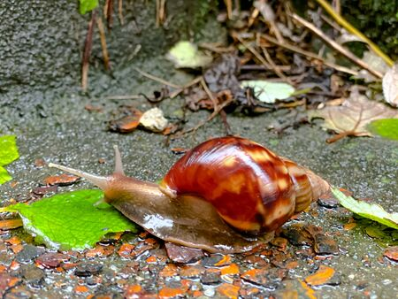 small snail at cement with raining day Stock fotó