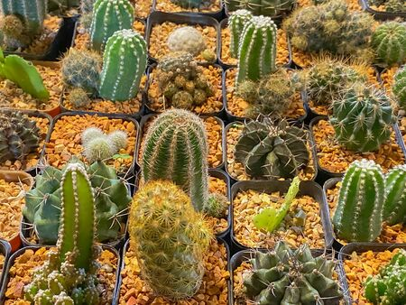 collection of cactus in pot