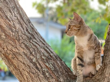 little Asia cat on the tree with blurred home background. Stock fotó