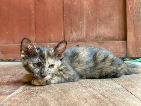 Cute kitten or small cat lay down front of house