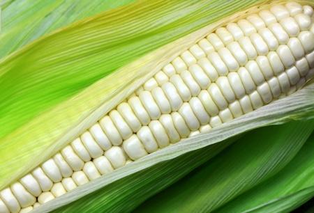 White corn varieties.  Stock Photo - 9544101