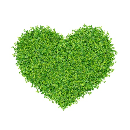 Small green plants depend A heart shape. on on white background isolated