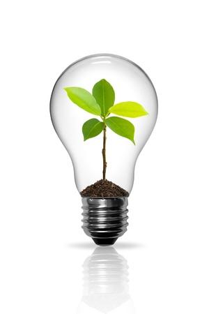 内部の芽と電球 写真素材