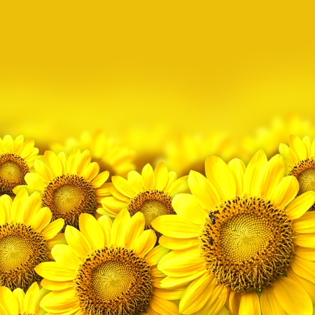 background with sunflower details. photo