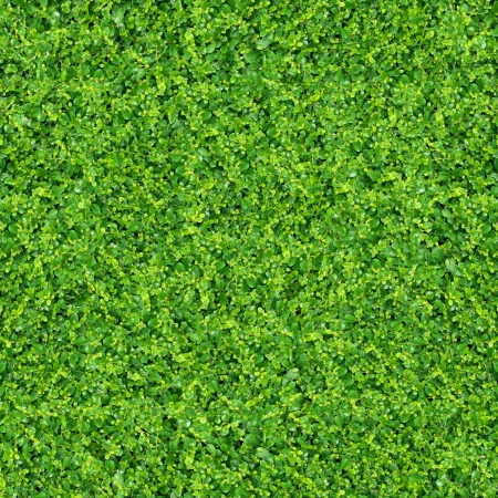 putting green: green plants and grass. on outdoor background Stock Photo