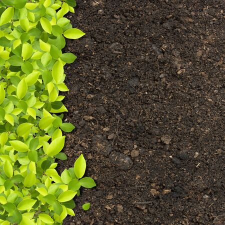 define: grass and green plants growing on soil manure Stock Photo