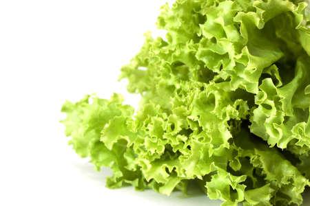 Lettuce, salad vegetable Stock Photo - 9868279