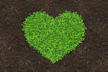 soil: erba e piante verdi cresce una forma di cuore in concime del suolo nel uccelli occhio vista