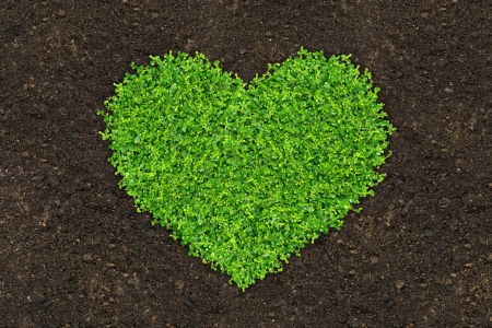 soil pollution: grass and green plants growing a heart shape on soil manure in the birds eye view