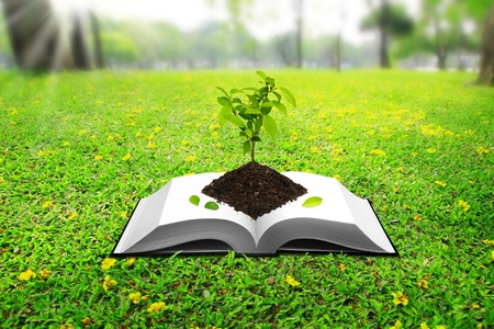 Seedlings based on the book.  Stock Photo - 10314562