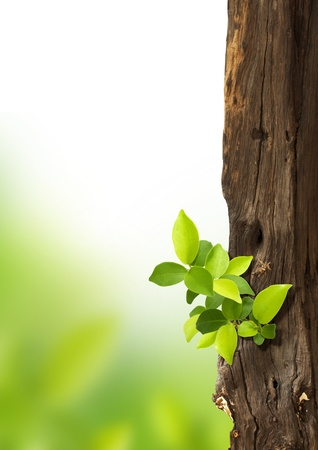 small trees growing on the old timber.  Stock Photo