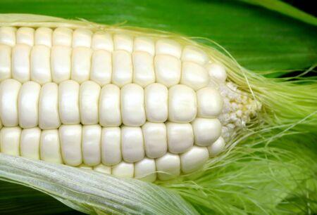White corn. Stock Photo - 10017038