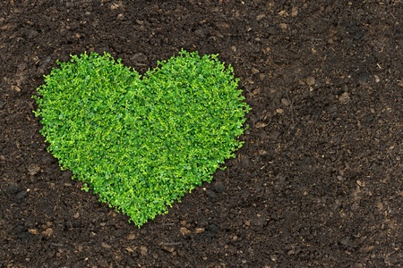depending: Grass is green heart-shaped, depending on the soil. Stock Photo