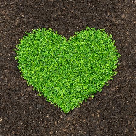 fertilizer: grass and green plants growing a heart shape on soil manure