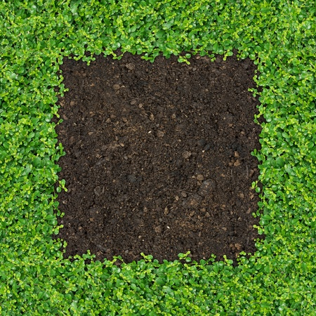 depend: Small green plants depend soil manure a square frame.