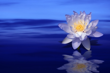 flor loto: flor de loto violeta sobre fondo de agua coloridas  Foto de archivo