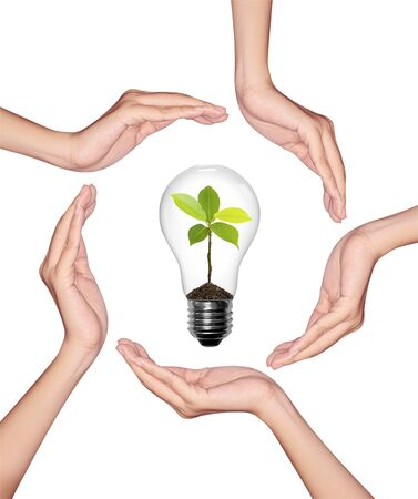 Bulb light in woman hand, light bulb with sprout inside on white background  photo