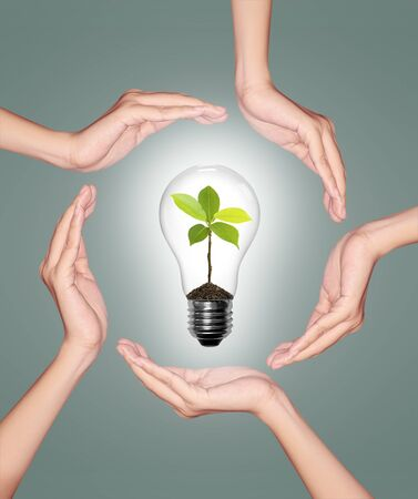 Bulb light in woman hand, light bulb with sprout inside photo
