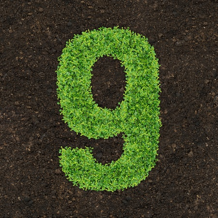 Number green of the grass on soil manure photo