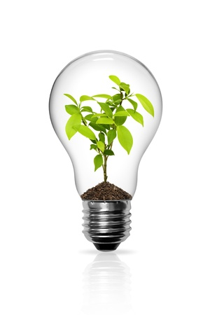 bulb idea: Seedlings grown in light bulb