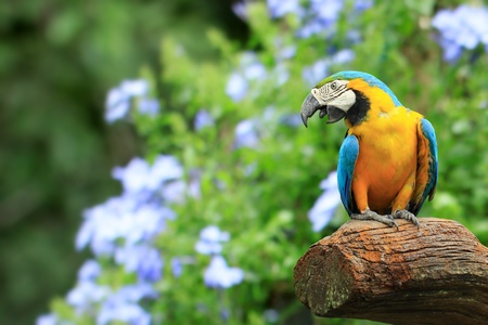 Parrot, on background as colorful flowers