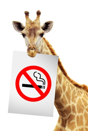 No smokes white paper on the brink of a giraffe  photo