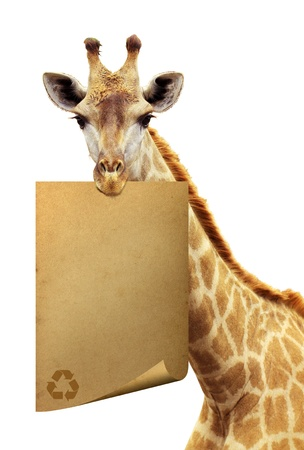 Recycle old paper on the brink of a giraffe  photo