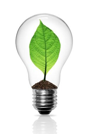 bombilla de luz: Hojas crecen en una bombilla de luz Foto de archivo